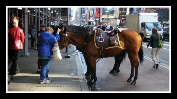 Times Square tourist meets and greets New York City police horse.