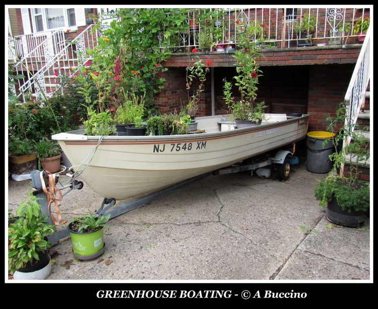 GREENHOUSE BOATING, Harrison, NJ photo by Anthony Buccino