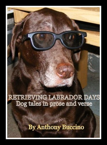 Retrieving Labrador Days by Anthony Buccino, stories and verse