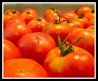 Tennessee tomatoes-Public domain photo